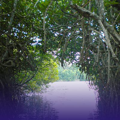 MADU-RIVER-BOAT-SAFARI-FEATURE-IMAGE-KARUSAN-TRAVELS